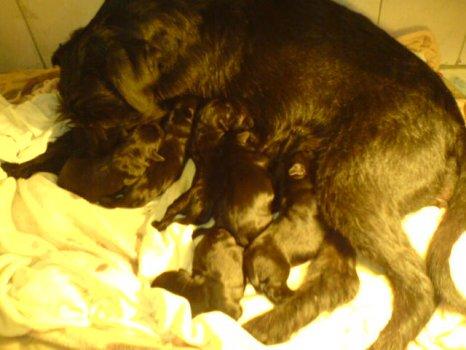Máma po porodu s prcakama